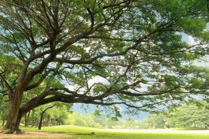 grote boom in park foto