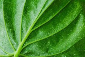 groene blad textuur