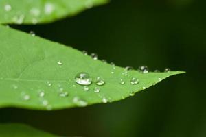 druppels water op een blad foto