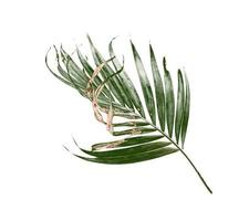 groen en bruin palmblad op wit foto