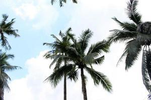 palmbomen en blauwe hemel met wolken foto