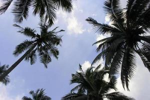 blauwe lucht en palmbomen