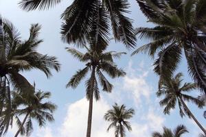 groep palmbomen foto