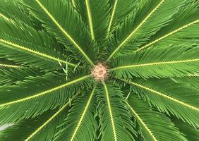 bovenaanzicht van palmboom foto