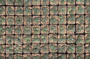 cactussen in potten bovenaanzicht foto