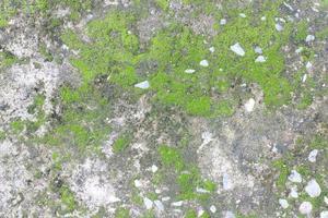mos op grijze steen