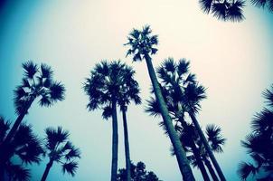 palmbomen met lofi bewerken