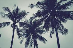 palmbomen onder grijze luchten