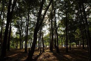 bomen op een heuvel
