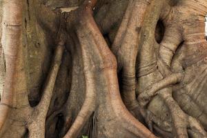stam van de boom foto