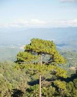 hoge bomen groeien op de top van de berg