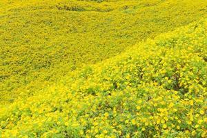 gele bloemen op het veld