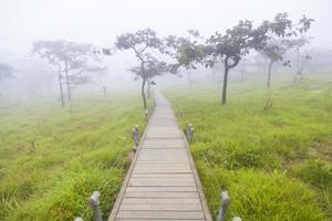 houten loopbrug in het bos