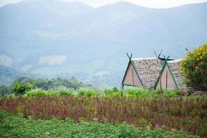 huisjes op een boerderij in thailand