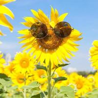 zonnebloem met zonnebril foto