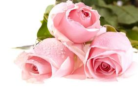 drie roze rozen foto