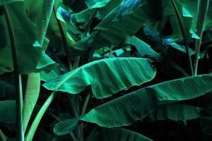groene bladeren in de jungle foto