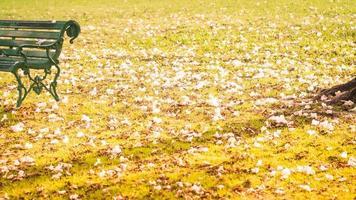 bladeren vallen in het gras foto