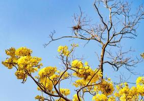 gele bloesem bloem