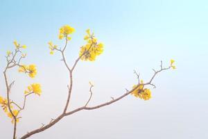 gele bloemen bloeien in het voorjaar foto