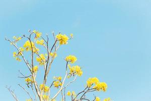 gele bloemen met een blauwe lucht foto