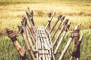 bamboe loopbrug naar het rijstveld