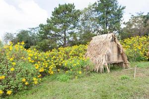 hut op het gazon
