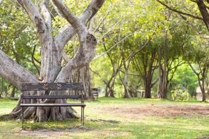 bankje onder de boom in het park foto