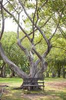houten bankje onder de boom foto