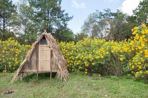 hut op het gazon foto