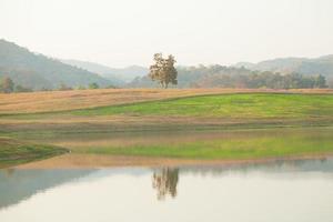 boom op de heuvel foto