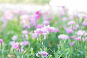 violette bloemen in het park
