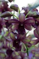 bloeiende orchideebloemen foto