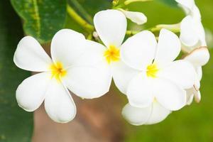witte bloemen op een boom