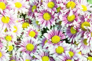 paarse bloemen in het park