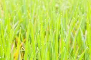 waterdruppels zaten boven op het gras foto