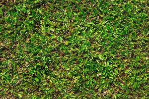 groen gras voor textuur of achtergrond foto