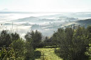 bomen tegen mistige heuvels in Toscane, Italië