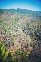 uitzicht op bos berglandschap