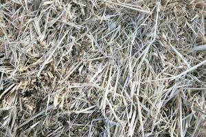 droog gras textuur