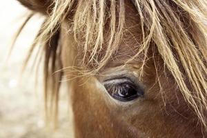 close-up van een paardenoog foto
