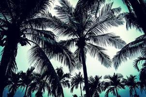 palmbomen met hoog contrast bewerken foto