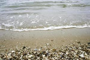 schelpen aan kust foto