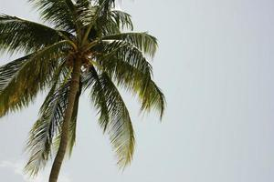 palmboom en lucht
