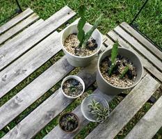 cactussen op houten tafel