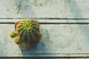 cactus van bovenaf foto