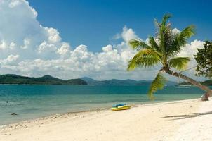 kokospalmen en strand in thailand foto