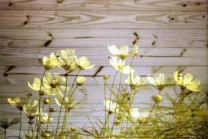 gele bloemen tegen hout foto