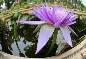 fisheye-weergave van paarse bloem
