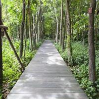 houten loopbrug in het park